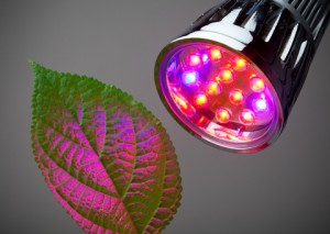 http://www.dreamstime.com/stock-photography-led-grow-light-image19558482